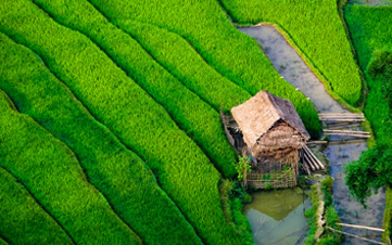 Little House by Rice Fields in Sapa