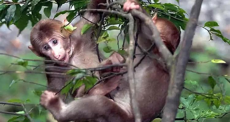 the monkey on Mt. Emei