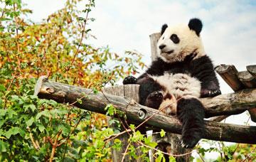 Panda Keeper Program Tour