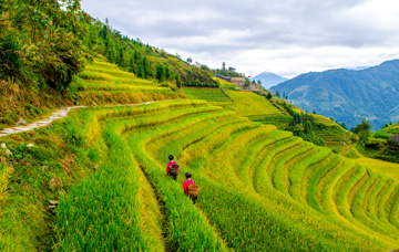 One-Day Longji Rice Terraced Fields and Minority Villages Tour