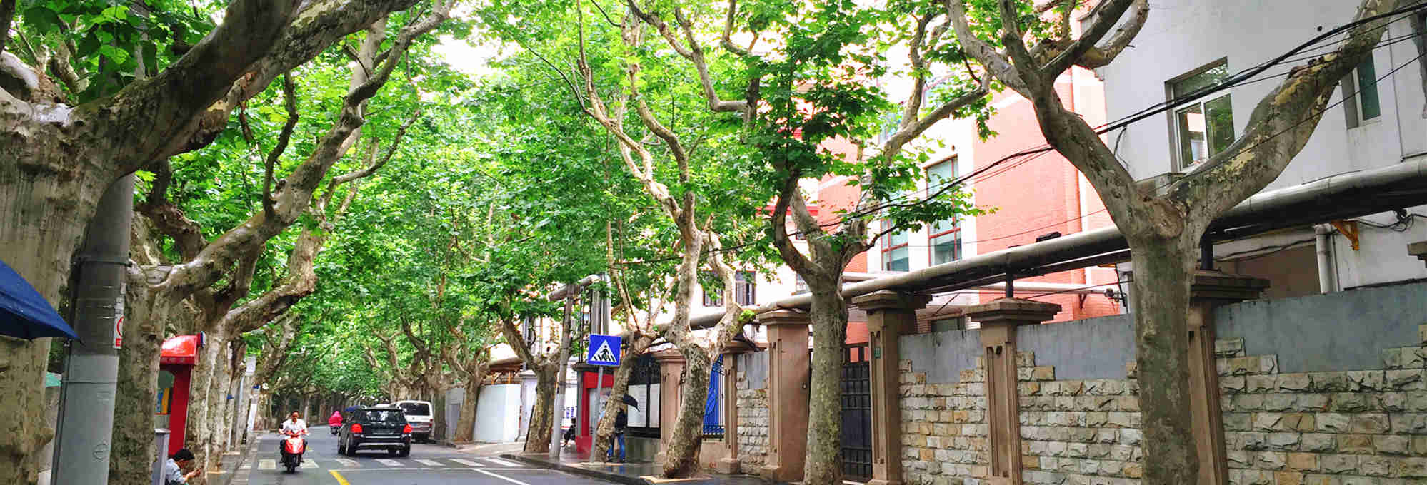 3-Hour Former French Concession Walking Discovery Tour