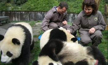 Volunteers of Giant Panda Protection Programs
