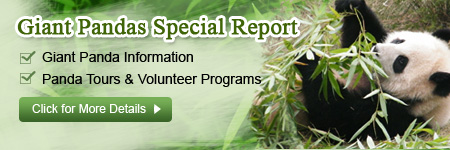 Giant Panda Special Report