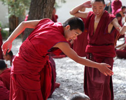 Monks dabate at Sera Monastery