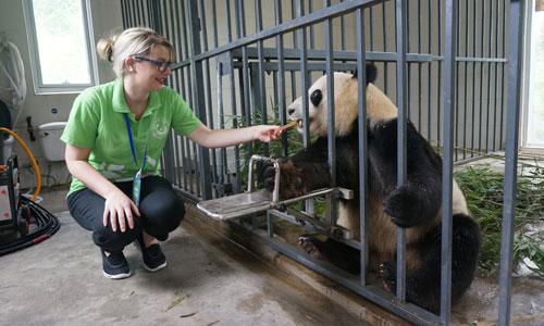 Panda Keeper Program, Feeding the Panda
