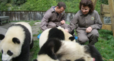 Play with Giant Pandas