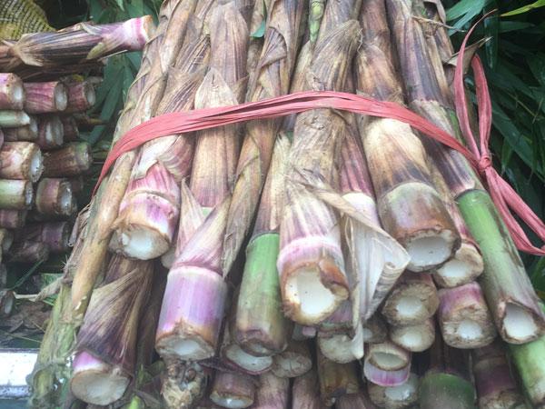 Fresh bamboos