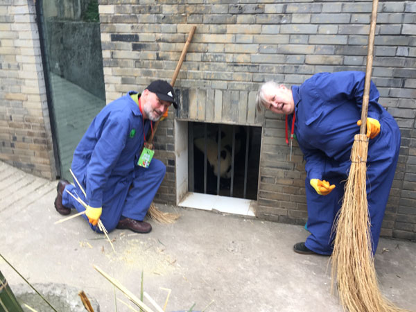 Clean panda's enclosure