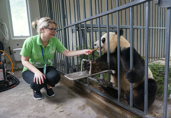 Wolong panda keeper program tour