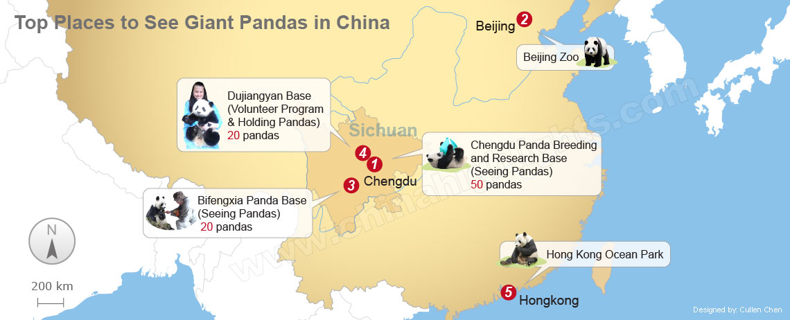 best places to see pandas