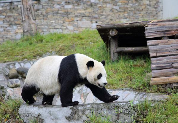 Red panda keeper tour