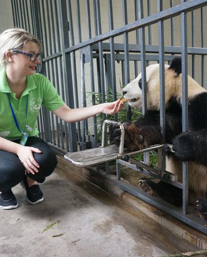 Be a Panda Keeper