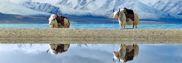 5-day Lhasa and Lake Yamdrok Tour