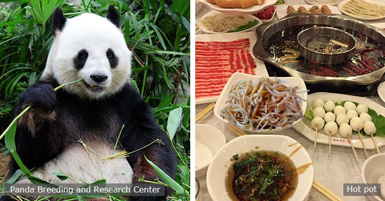 giant panda and chengdu hot pot