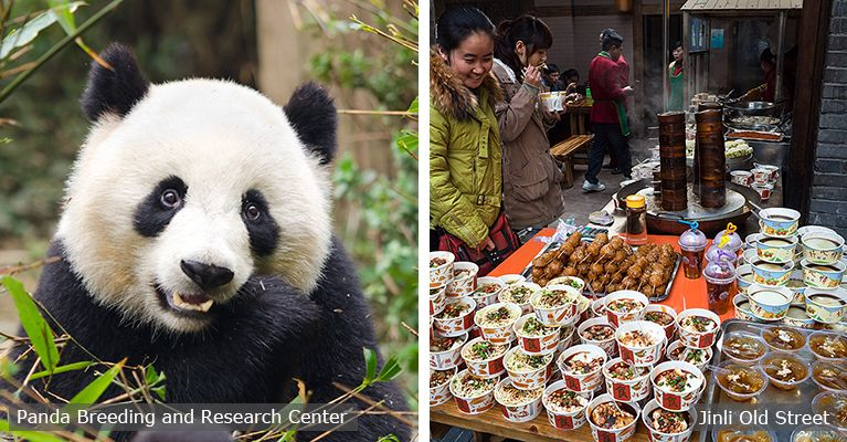 giant panda anc chengdu local food