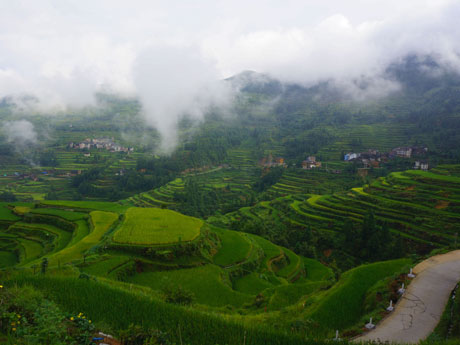 Rice-Terrace Hiking