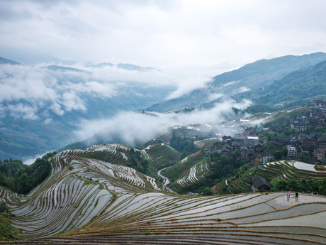 The Longji Rice Terraced Fields