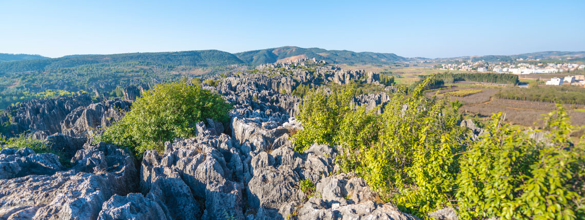 Stone Forest