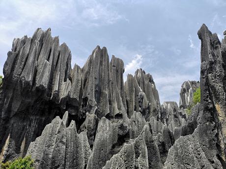 La forête des pierres