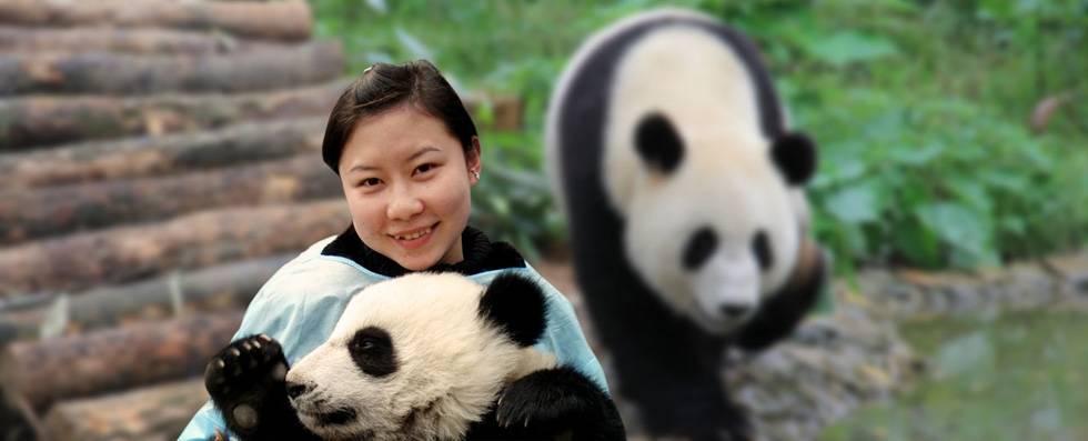 Panda Expert Guide