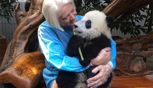 Tout près des pandas