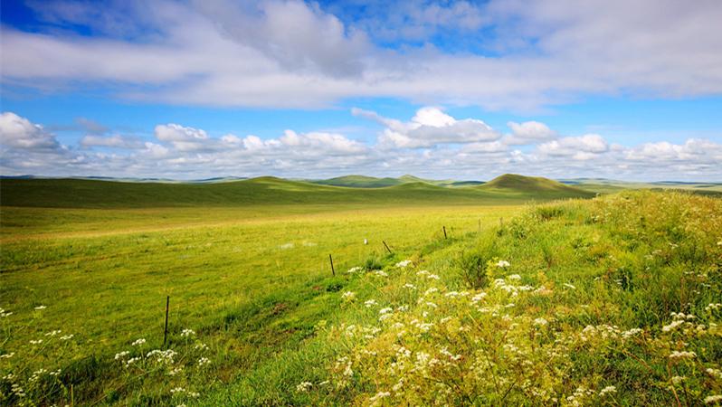 grassland,inner mongolia