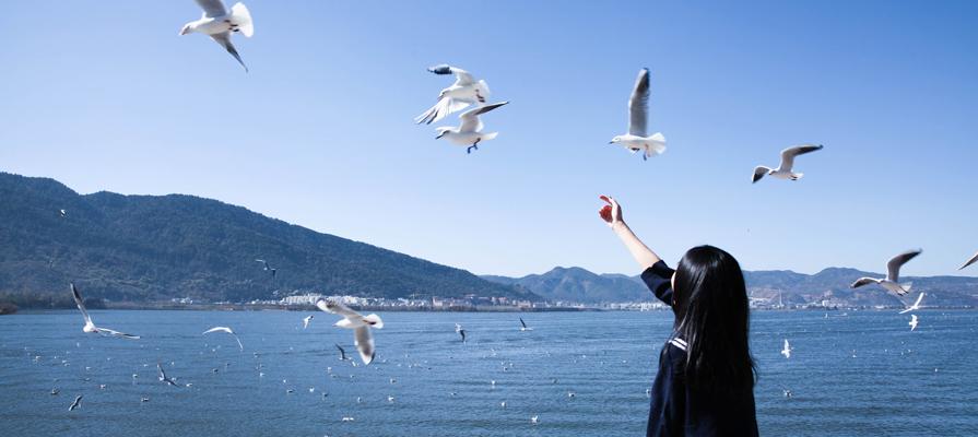 Feed the black headed gulls