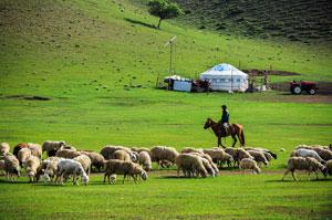 Flocks and herds at Huitengxile Grassland