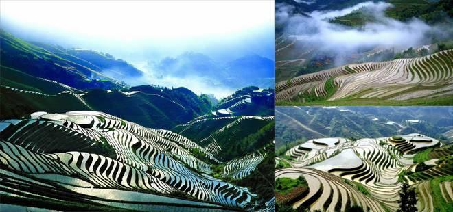 Rizières en terrasse de Longji