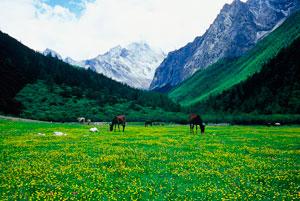 Prairie at Western Sichuan