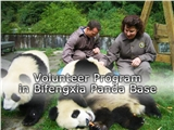 Volunteer Program in Bifengxia Panda Base